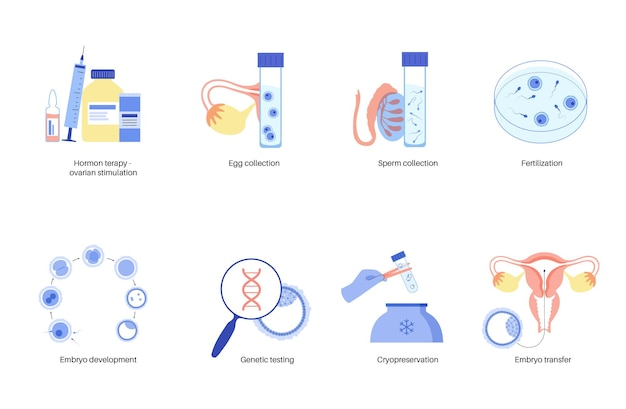 Anatomia delle cellule uovo umane. fecondazione, ginecologia e ricerca in fecondazione in vitro.