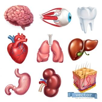 Cuore umano, cervello, occhi, denti, polmoni, fegato, stomaco, rene, pelle. medicina, organi interni.