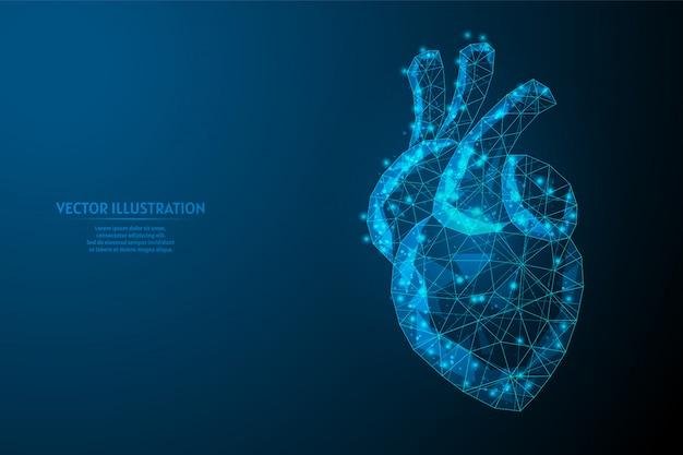 Cuore umano da vicino. anatomia dell'organo sistema di approvvigionamento di sangue. ipertensione, infarto, ictus, aritmia. medicina e tecnologia innovative. 3d poli illustrazione wireframe bassa.