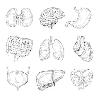 Organi interni umani. cervello, cuore e reni disegnati a mano, stomaco e vescica.