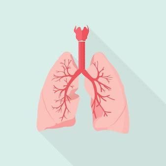 Illustrazione di polmoni umani