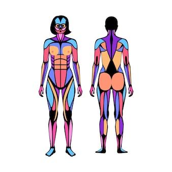 Sistema muscolare umano. struttura dei gruppi muscolari e dei legamenti delle donne