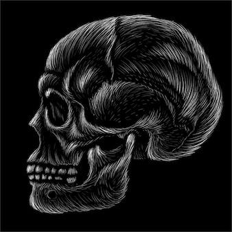 Illustrazione disegnata a mano del cranio umano