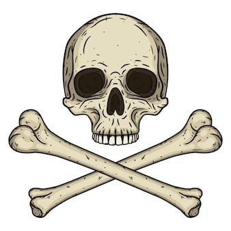 Cranio umano con due ossa incrociate isolato su bianco