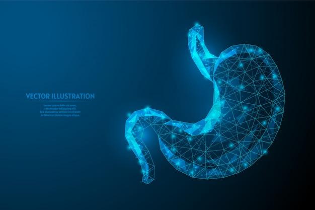 Stomaco umano da vicino. anatomia dell'organo apparato digerente. ulcera, cancro, gastrite, disbiosi. medicina e tecnologia innovative. 3d poli illustrazione wireframe bassa.