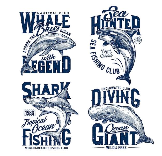 Squalo testa di hummer, assassino e balene blu, club marino mascotte.
