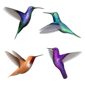 Colibrì. raccolta di immagini realistiche di vettore di colibri di uccelli di volo belli colorati piccoli esotici. illustrazione colibrì, mosca esotica colibri
