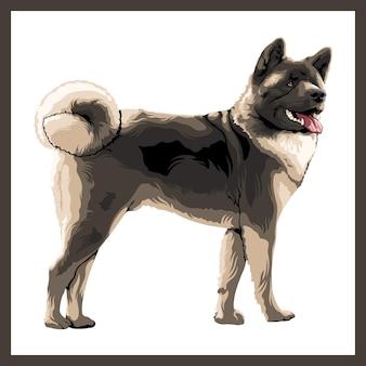 Illustrazione di un cane akita.