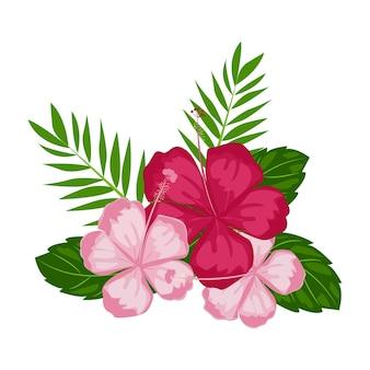 Illustrazione bellissimi fiori di ibisco rosa in fiore e foglie tropicali