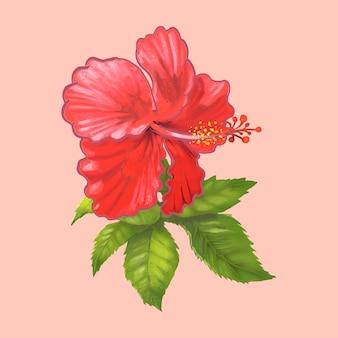 Illustrazione di un bel fiore rosso