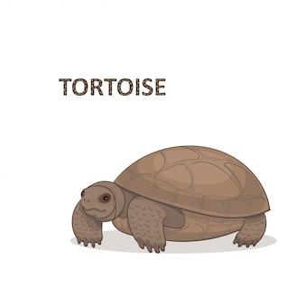 Illustrazione, una tartaruga bidirezionale marrone del fumetto ,. Vettore Premium