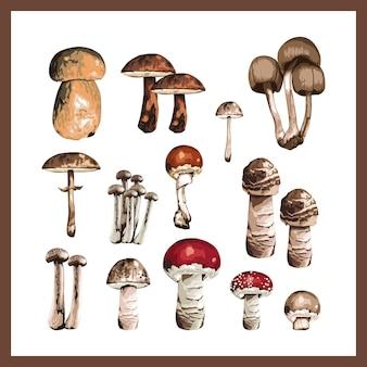 Illustrazione di una raccolta di diversi funghi.