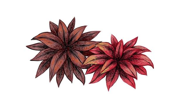 Illustrazione della pianta di cordyline fruticos con foglie viola