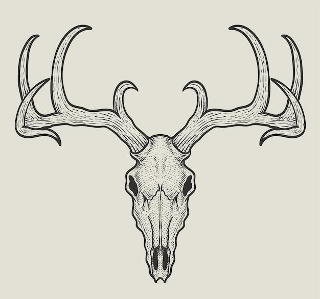 Illustrazione testa di teschio di cervo su sfondo bianco