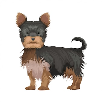 Illustrazione di cane yorkshire terrier