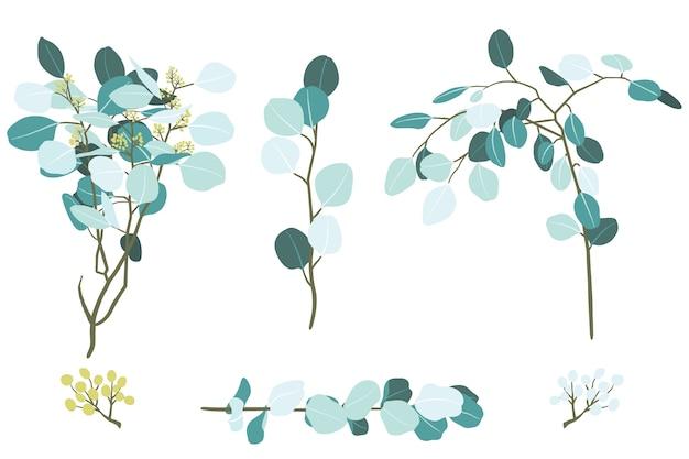 Illustrazione degli elementi del ramo del fogliame di eucalipto