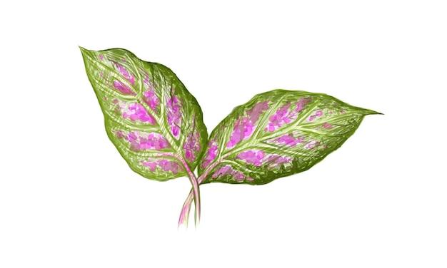 Illustrazione fresh aglaonema o dieffenbachia foglie