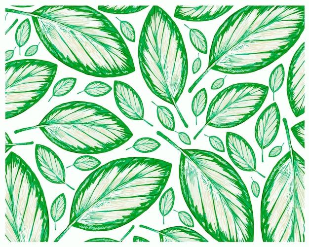 Illustrazione del reticolo di foglie fresche di calathea picturata