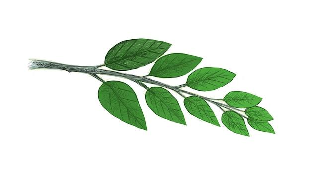 Illustrazione di foglie verdi fresche su white
