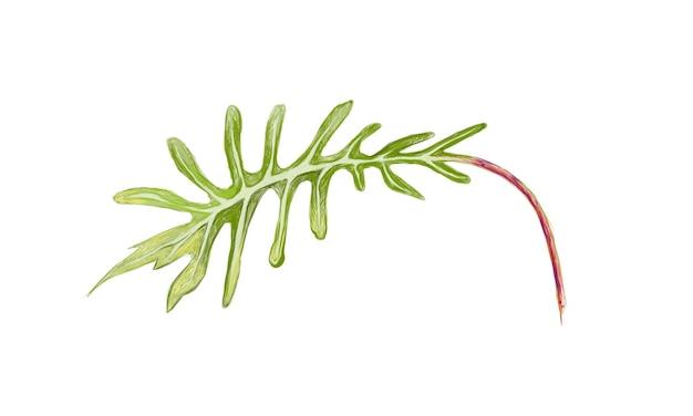 Illustrazione delle piante verdi fresche di philodendron xanadu