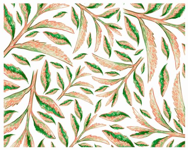 Illustrazione di fresh kalanchoe tubiflora piante succulente pattern