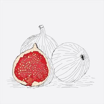 Illustrazione di frutta su sfondo bianco