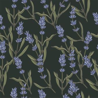Illustrazione ramo di lavanda stile vintage inciso