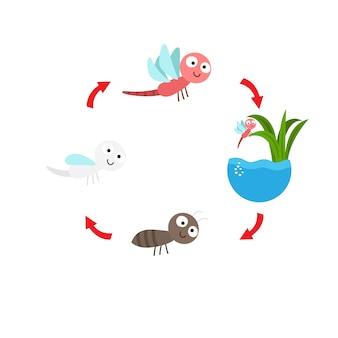 Vettore della libellula del ciclo di vita dell'illustrazione