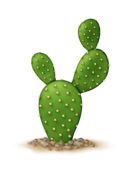 Illustrazione di opuntia microdasys o cactus orecchie da coniglio nel terreno