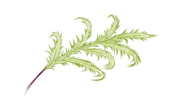 Illustrazione di phlebodium aureum o golden serpent fern leaf