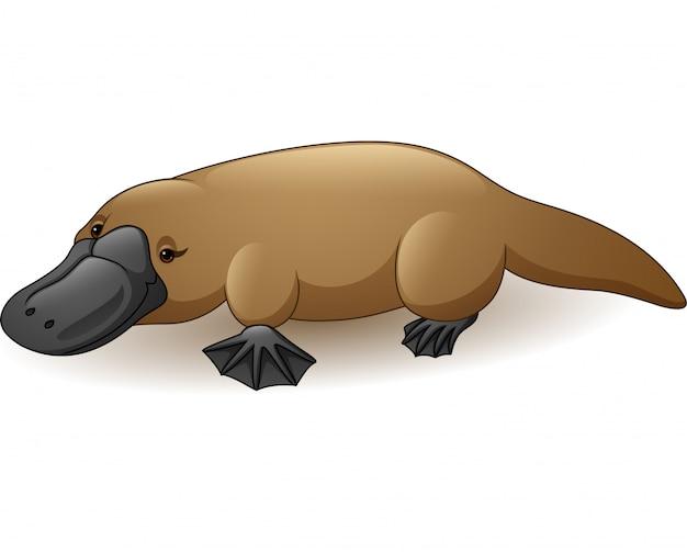 Illustrazione di ornitorinco isolato su sfondo bianco