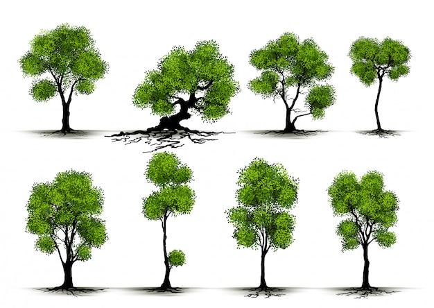 Albero realistico dell'illustrazione isolato