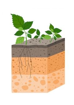 Illustrazione profilo del suolo con pianta, razza di orizzonti del suolo. pezzo di terra con piante e radici in e.