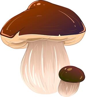 Illustrazione vettoriale funghi
