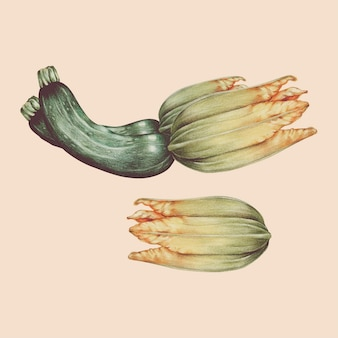 Illustrazione di stile acquerello vegetale