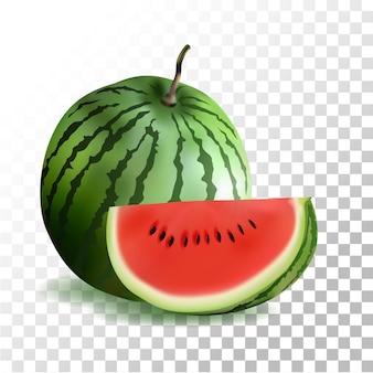 Illustrazione anguria frutta