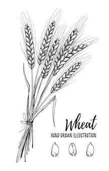 Illustrazione - grano Vettore Premium