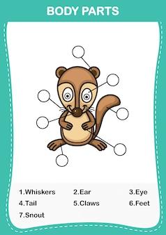 Illustrazione del vocabolario di xerus parte del corpo, scrivi i numeri corretti del corpo parts.vector