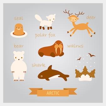 Illustrazioni di animali artici. cervo, tricheco, foca, squalo e volpe polare