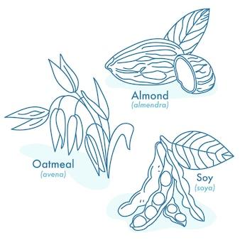 Illustrazioni di avena di mandorle biologiche e semi di soia