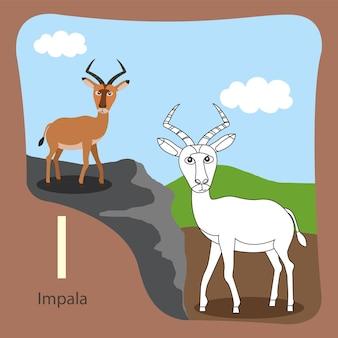 Illustratore di impala isolata e da colorare