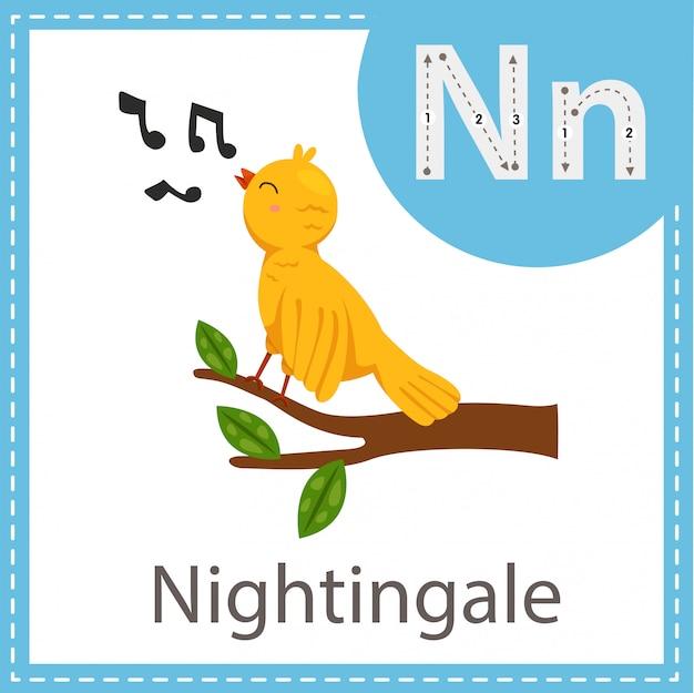 Illustratore dell'uccello nightingale
