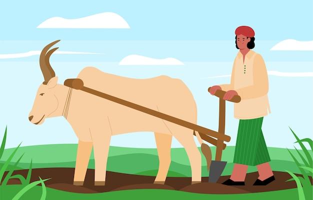 Il coltivatore indiano ara il campo con l'aratro del bue tirato