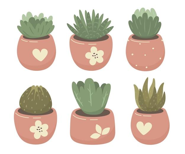 Fiori da interno, piante grasse.