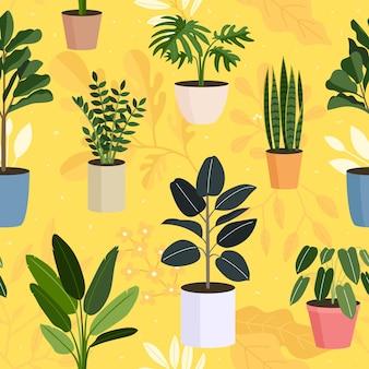 Piante da appartamento, piante in vaso senza cuciture