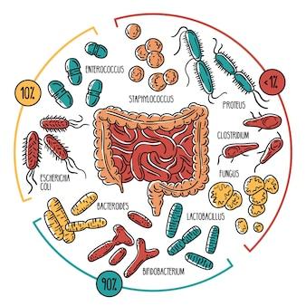 Infografica della flora intestinale umana microbiota intestinale del tubo digerente