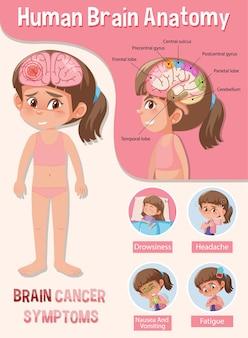 Poster informativo del diagramma del cervello umano