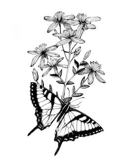 Farfalle disegnate a mano dell'inchiostro sulla pianta di erbe