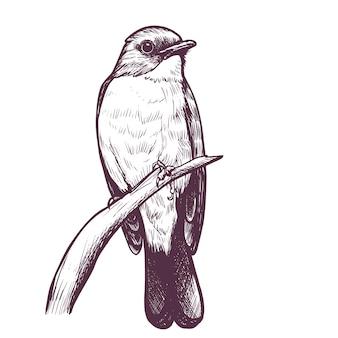 Pigliamosche disegnato a mano di inchiostro