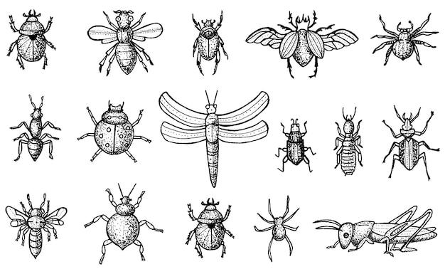 Set di insetti con coleotteri, api e ragni isolati su sfondo bianco. stile inciso.